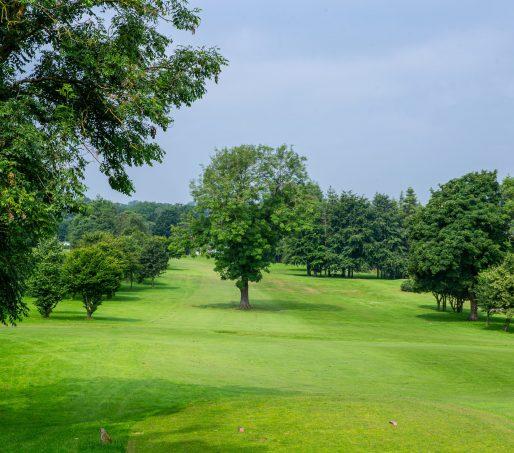Golf Hole8